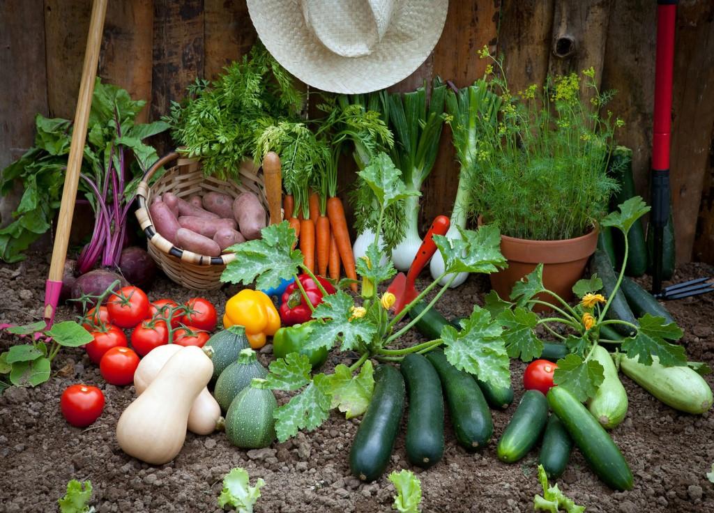 Собственный огород