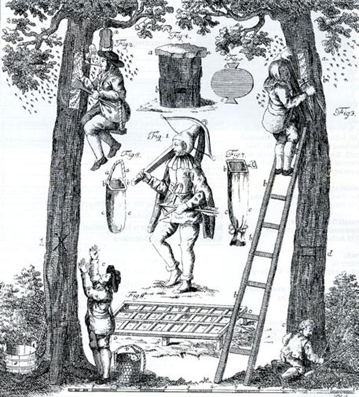 Средневековое бортничество
